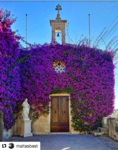 Malta culture; bougainvillea; malta